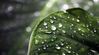 Sfondo HD vegetazione